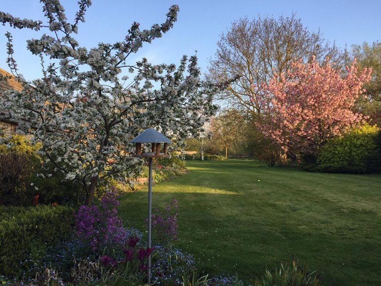 Lizzie's garden
